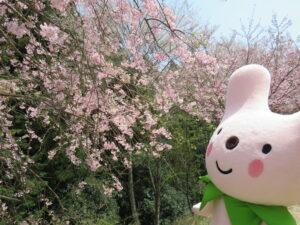 カーミン&桜華園