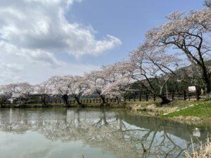 現存する銀の馬車道 逆さ桜